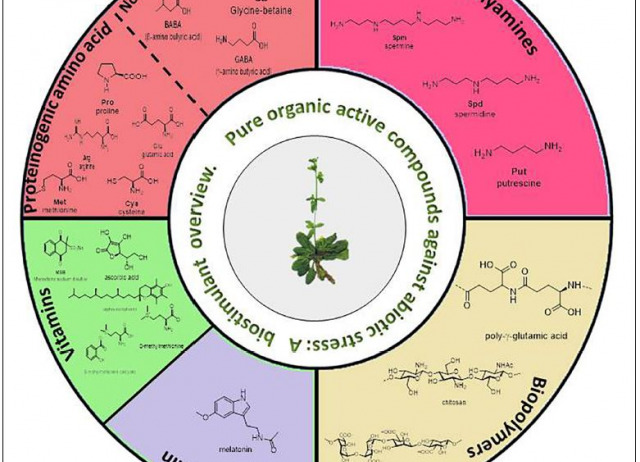 Pure Organic Active Compounds Against Abiotic Stress: A Biostimulant Overview